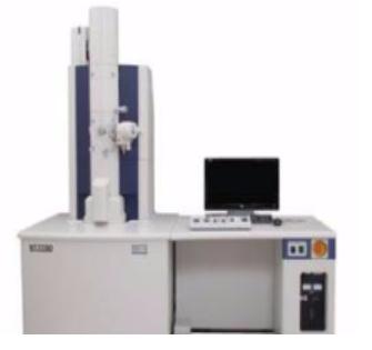 生物样本透射电镜(TEM)